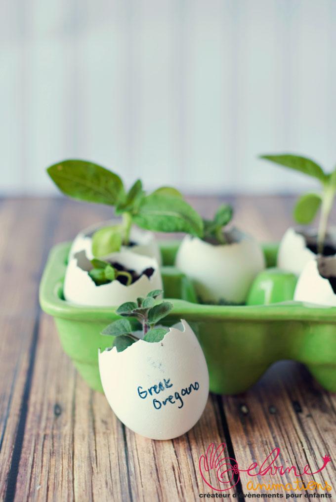 eggshell-seed-starters-5